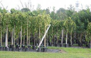 Strengere+regels+voor+import+plantmateriaal