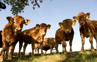 Brandbrief naar Van Dam over vleesveehouderij