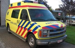 Koe+trapt+man+dood+in+Vlaanderen