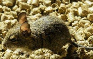 Eerste+verlenging+ratten%2D+en+muizenbestrijdingsmiddelen