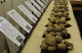 Boer+vraagt+meer+resistentie+en+robuuste+aardappelrassen