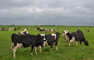Handreiking+BEX+voor+melkvee+vernieuwd