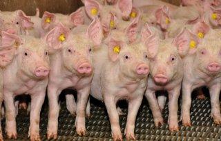 Onduidelijkheid+over+besteding+varkensmiljoenen