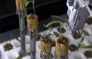 Snel+planten+sorteren+met+Marvin%2Dtechnologie