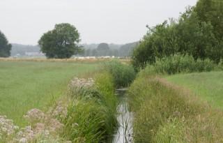 Gelderland akkoord met groei bedrijven bij natuur