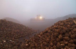 %27Alle+suikerfabrikanten+van+CEFS+draaien+verlies%27