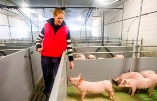 Verduurzamingsregeling+intensieve+veehouderij+gewild