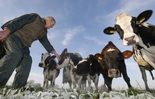 VVD Fryslân eist extra onderzoek ammoniakbeleid