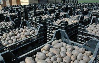 Landbouwers in de fout met kwekersrecht Agria