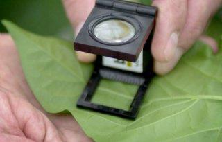 Nefyto wil meer transparantie over gewasbescherming