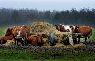Fosfaatrechten+vrijstellingsregeling+vleesveehouderij+beperkt+benut