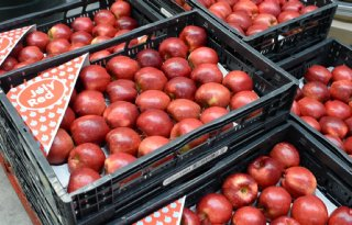 JollyRed appel moet fruittelers helpen