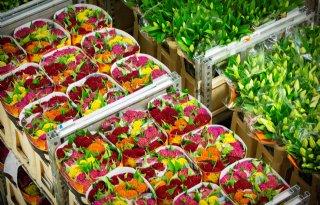 FloraHolland+voert+beeldveilen+planten+in+fases+in