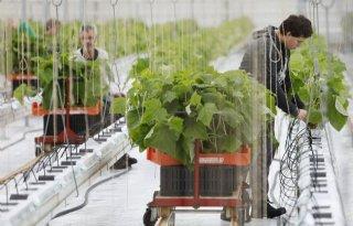 Glastuinbouw+pleit+voor+meer+en+betere+huisvesting+arbeidsmigranten
