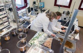 Landbouwministerie+steunt+insectenexporteurs