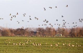 Minder+ganzenschade+in+Gelderland