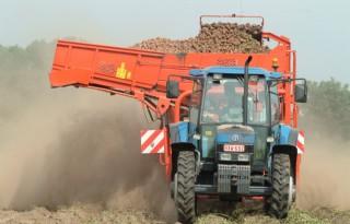 Meer aardappelen en suikerbieten in Vlaanderen