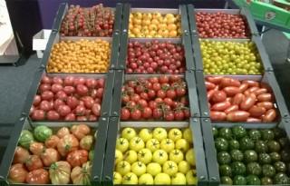 Alleen Nederlandse tomaat profiteert van groei