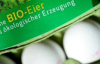 Meer Nederlandse eieren naar Duitsland
