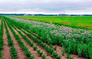 Nederland+verliest+jaarlijks+7500+hectare+landbouwgrond