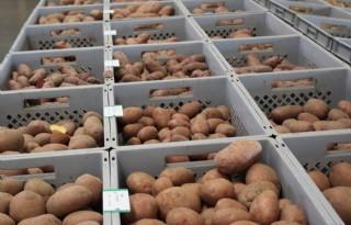 Oude+wetgeving+remt+ontwikkeling+aardappelteelt