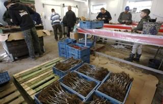 Agrarische werkgever betaalt in 2018 iets meer WW-premie