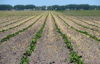 Boeren+Valthermond+mogen+zegje+doen+over+bodemdaling