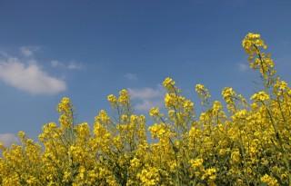 Boerenbond+vecht+voor+positie+biobrandstof