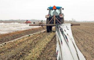 Temperatuurschommelingen onder folie gevaar voor asperge
