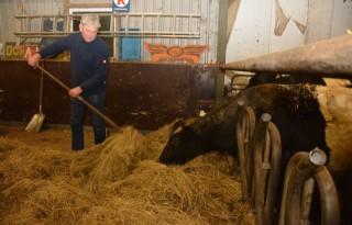 Gelderse veehouder op de bres voor Lakenvelder