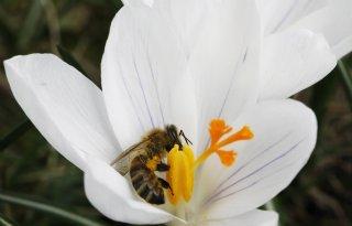 Insectenkweker+levert+nieuw+verdienmodel+tuinbouw