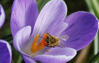 Insectenpetitie+ruim+100%2E000+keer+ondertekend