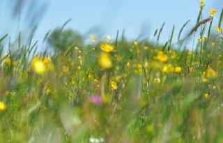 Veenweideboeren+gaan+aan+de+slag+met+kruidenrijk+grasland
