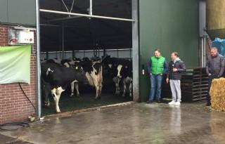Epke Zonderland stuurt koeien de wei in