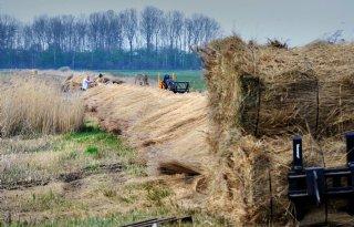 Nieuwe+aanpak+nodig+voor+natuuropgave+Friesland