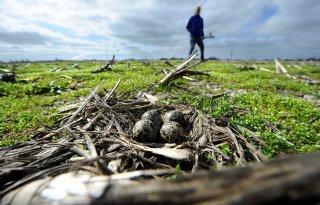 Landschap+Overijssel+werft+weidevogelvrijwilligers