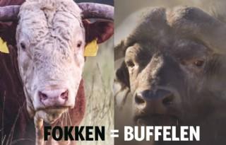 Fokken+zit+ook+Burgers%27+Zoo+in+het+bloed