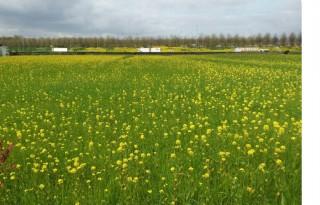 Bloemenzaad+voor+meer+biodiversiteit