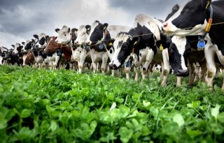 FrieslandCampina voorzichtig met aannemen bioboeren