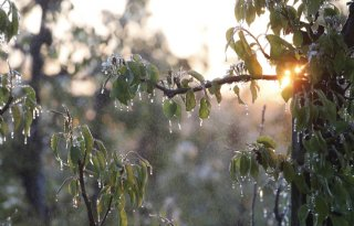 Record: zevende winter zonder strenge vorst