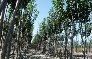 Competitie+Boomproject+wijst+op+effect+planten+bomen