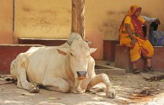 Groep hindoes slaat 'veedieven' dood