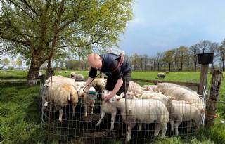 Zorg om resistentie wormmiddelen bij schapen