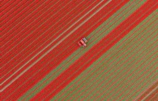 Tulpenroute+Flevoland+gaat+over+grenzen+heen