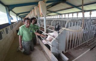 Waardering voor varkensvlees in Zuid-Afrika stijgt