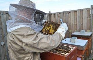 'Hobbyimkers bedreiging voor bijen'