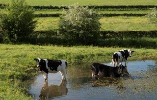 LLTB+start+Limburgse+beweging+naar+natuurinclusieve+landbouw