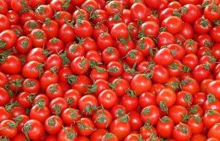 In+de+rij+voor+gratis+tomaten