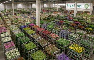 1%2C9+miljoen+euro+omzet+Plantion+rond+Moederdag