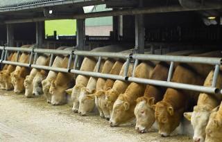 Boerenverzet tegen schrappen geld stierenhouders